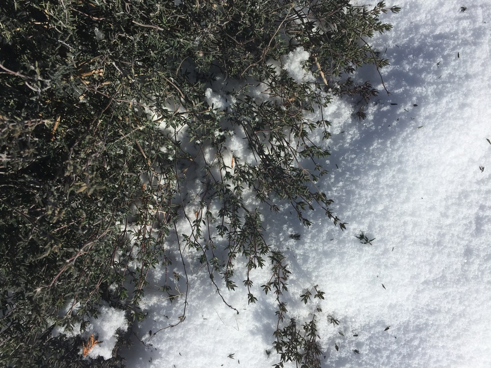 Thyme still has an a fresh aroma in all temperatures!