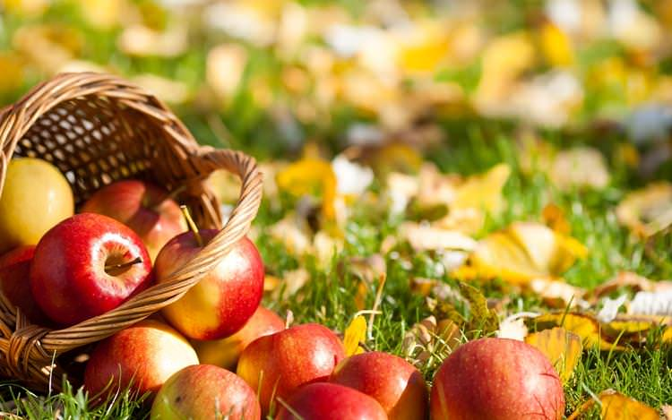 basket of apples in the grass.jpg