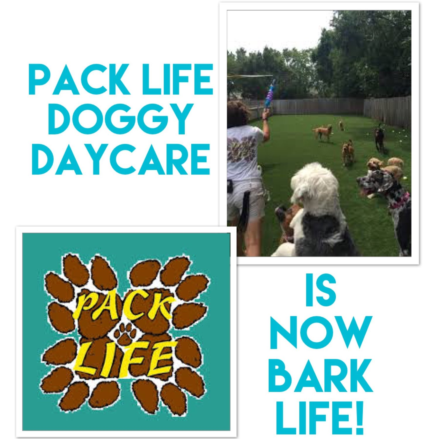 Pack Life is now Bark Life