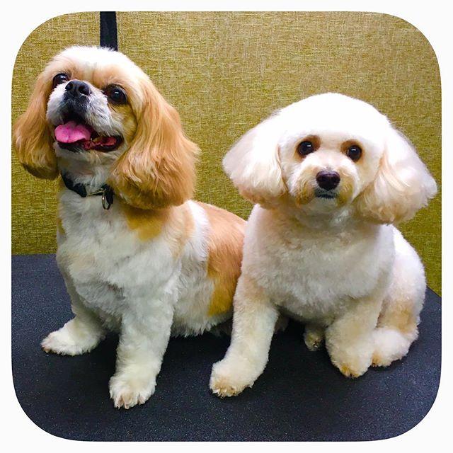 Emma & Shyna  #astrodoggrooming