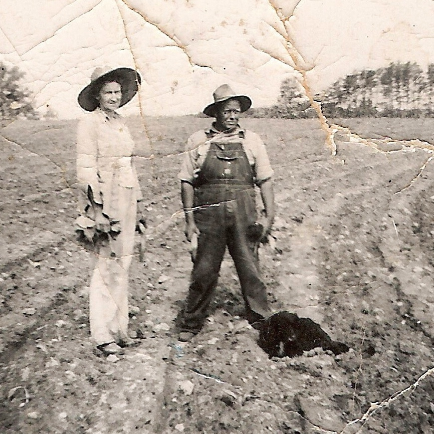 Red fields. William Henry Keesee straddles a row of tobacco he's planting near Callands, Virginia in the 1940s. His wife, Gillie, lends a hand with the planting.