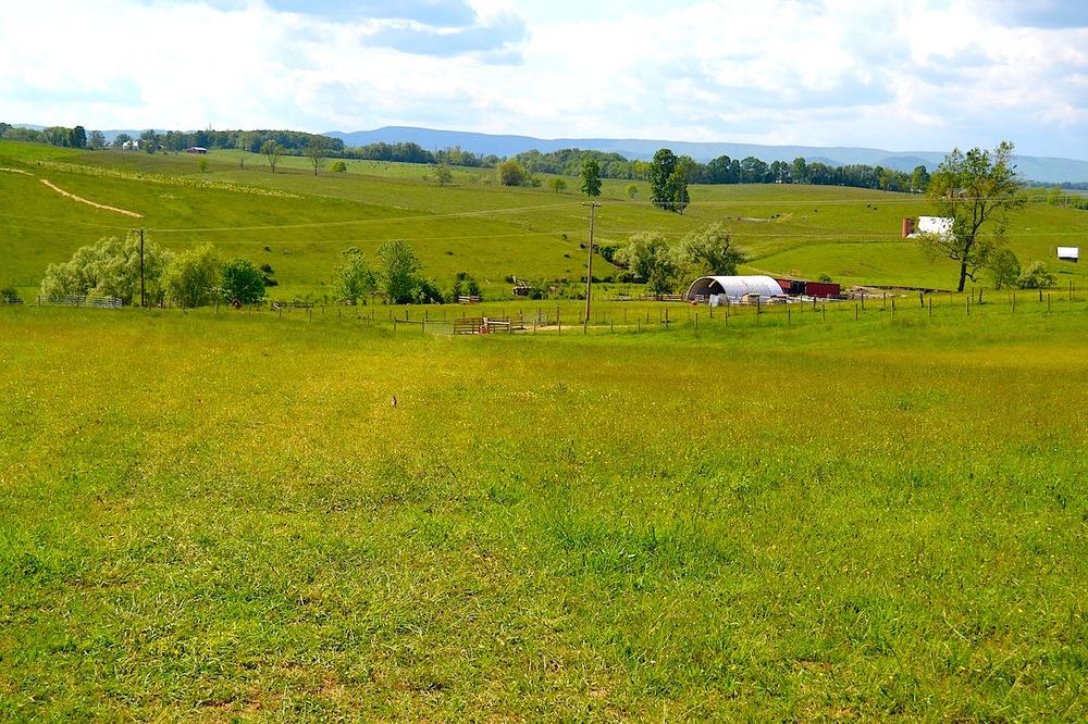 Land-Pasture 2-5.jpg