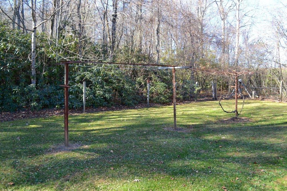Yard-4 Grapevine.jpg