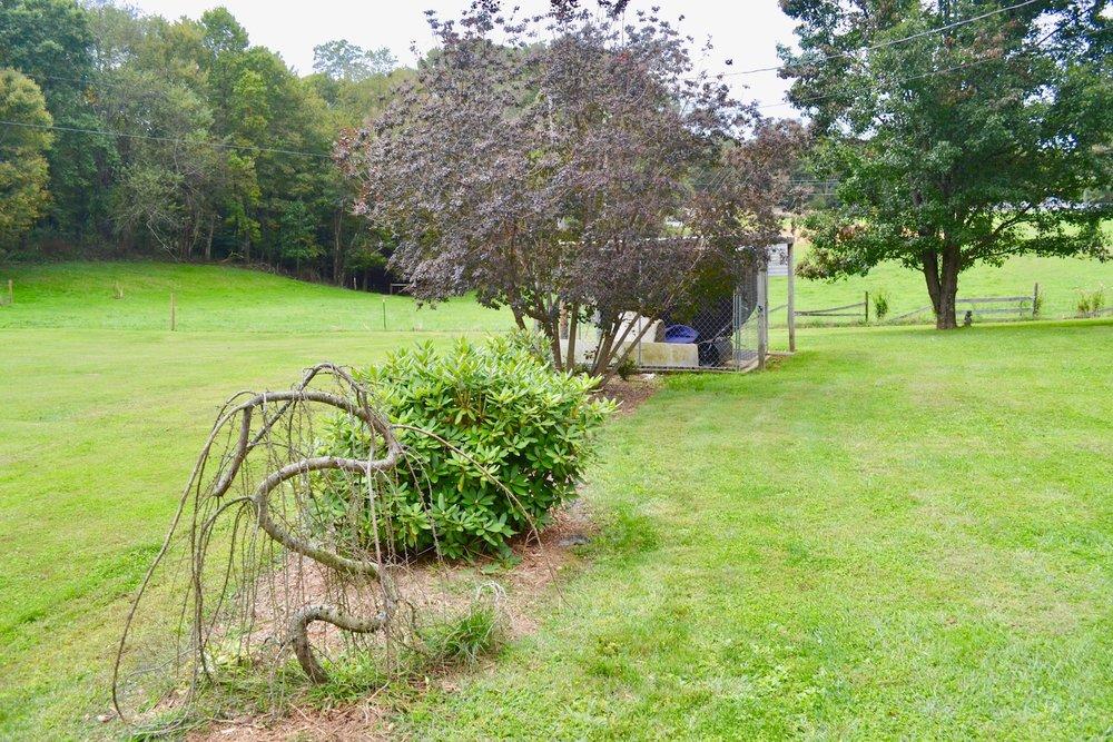 Yard-Back Yard-5.jpg