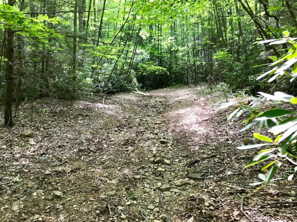 Trail on Property.jpg