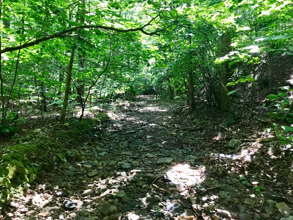 Trail on Property-3.jpg