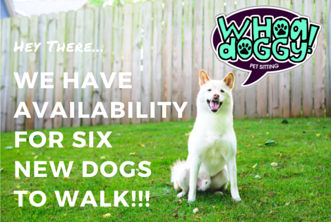 dog_walking_avilability_atlanta_decatur.jpg