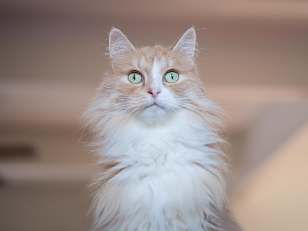 Cat Sitting -