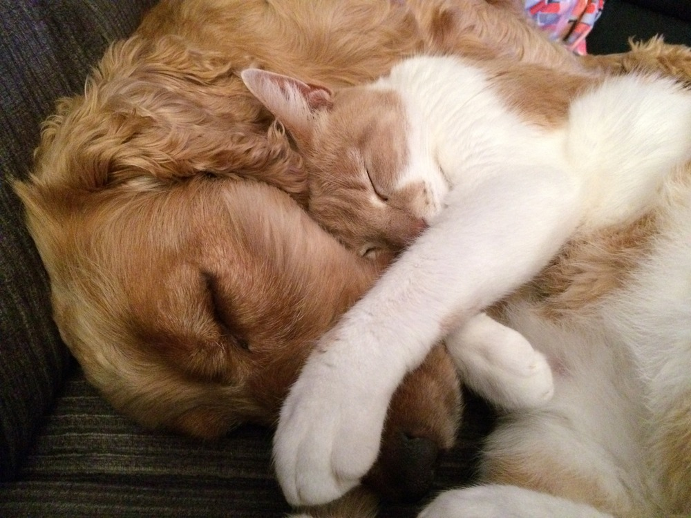 Cats and dogs really DO get along!