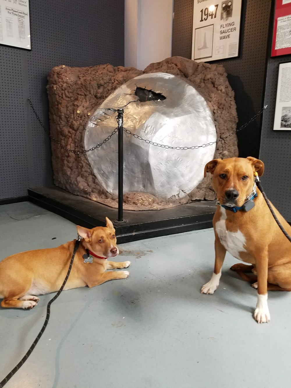The pups are excited to get to go on our adventures, just too sure they really wanted to meet aliens.
