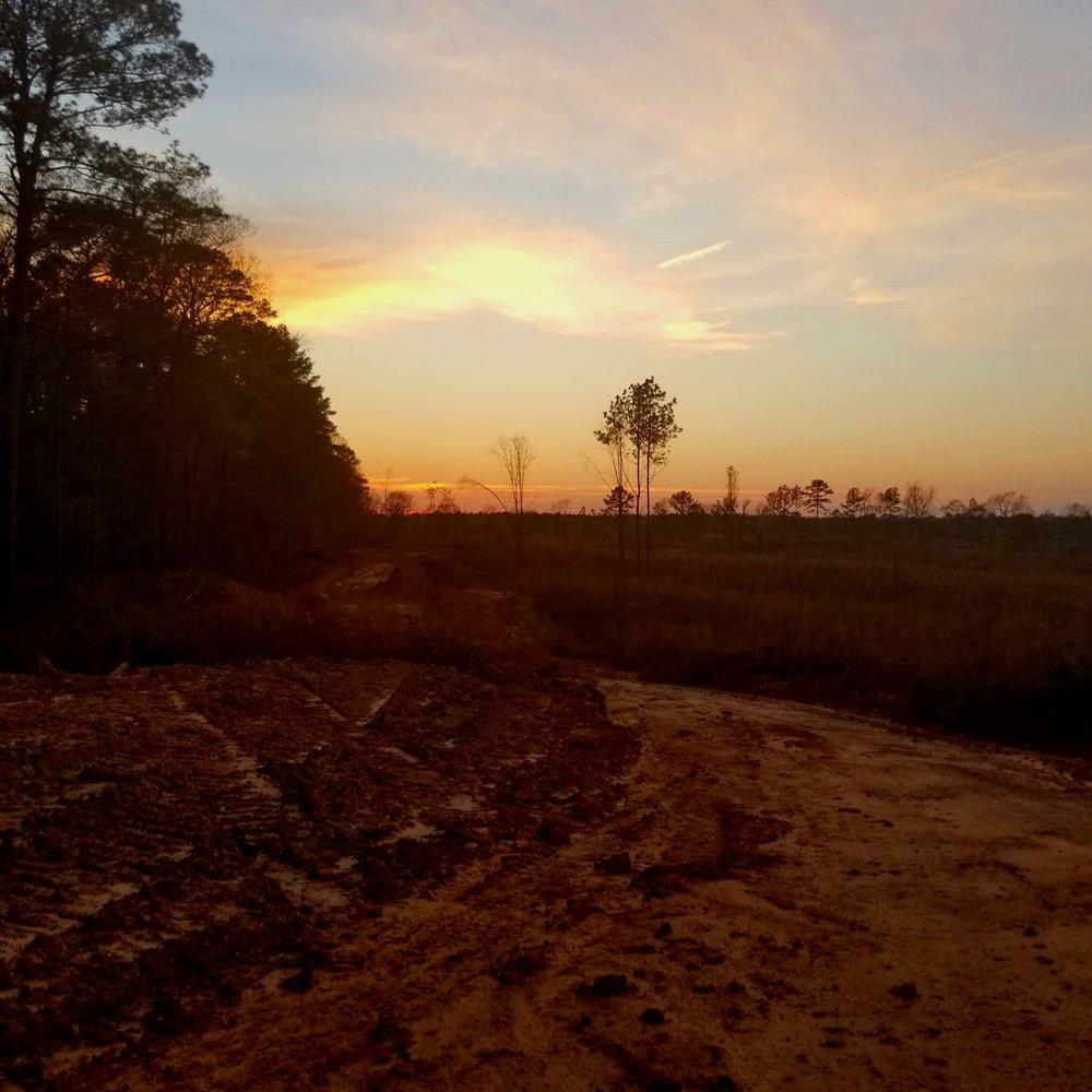 SunsetMS.jpg