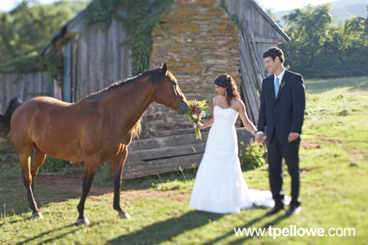 bride and groom horse sniffs flower arrangement