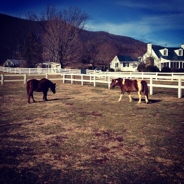 One cold morning and two ponies. #farmlife #countryvenues