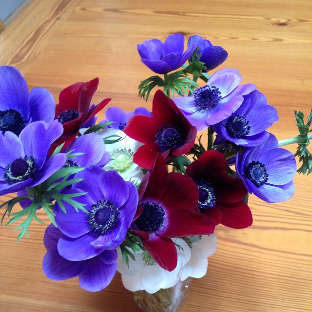 Anemonies!! Went out to the hoop house to find these. It's Spring!! #flowerfarm #flowers #weddings
