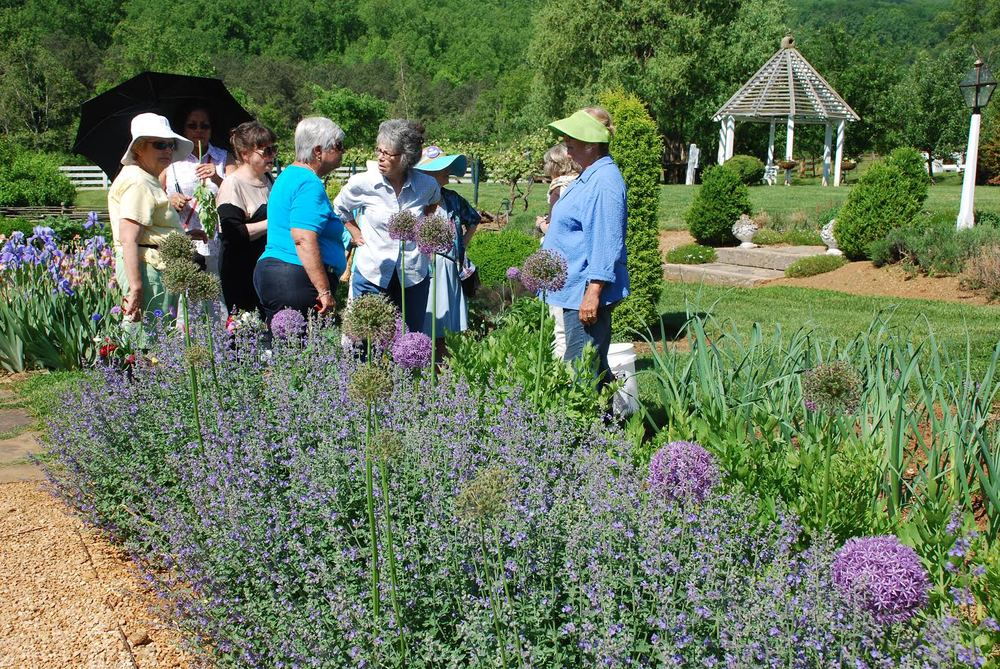 Foxie Morgan leading a group in the Herb Garden. In the foreground, you can see Catmint, and ornamental Allium blooming.