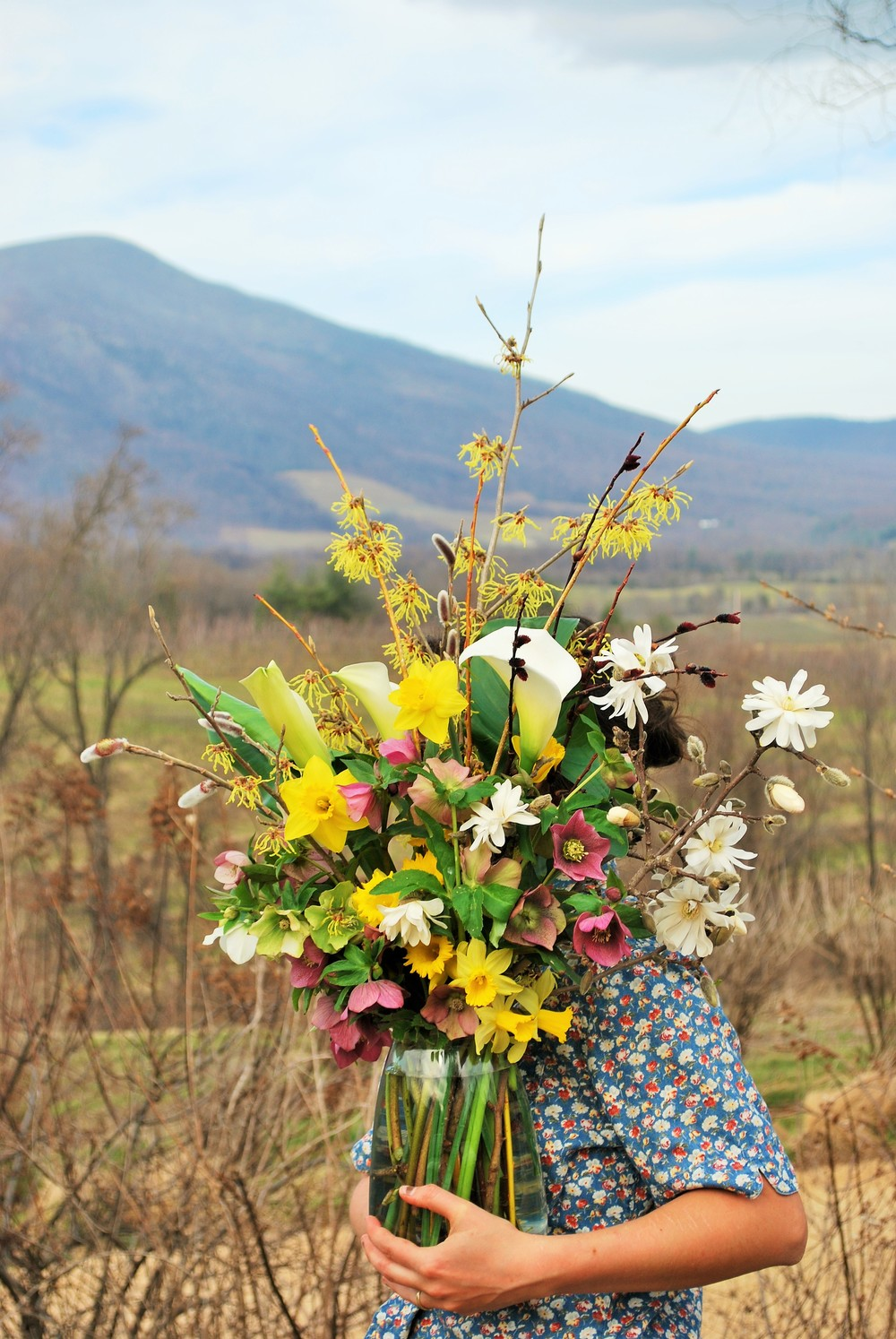 A gathered arrangement of Hellebore, Daffodils, Saucer Magnolia, Pussy Willow, Witch Hazel, Calla Lily and other budding twigs from the cutting gardens with Three Ridges Mtn. as the backdrop.