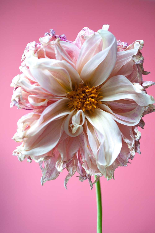 7 - Flowers - Halloween-3922.jpg