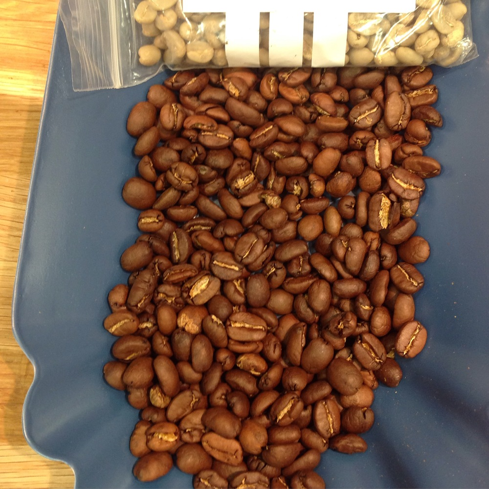 Rare Geisha coffee samples roasted for cupping at SCAE