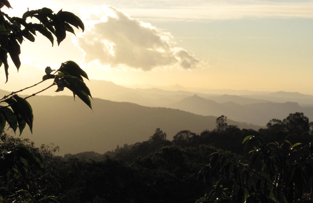 view from Keith Pech Darmeli Estate coffee in Boquete district of Panama