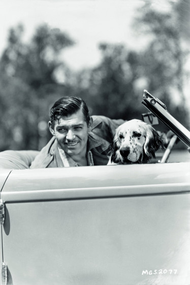 Clark Gable (1936) Pictured here at the wheel of his car with an English Setter, Gable kept a number of old English and Irish setters such as Queens, an Irish Setter and the prize-winning Lord Reily of Redwood. His springer Spaniel Cameo's Red Rocket was a champion in the 1950s. Photographed by Clarence Sinclair Bull.
