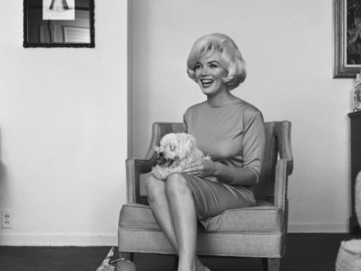 Marilyn Monroe (1961) Although she sometimes referred to him as a Poodle, Monroe's last dog Maf was in fact a Maltese, given to her by Frank Sinatra in 1961. She rather wickedly named the dog mafia, which was soon shortened to Maf.
