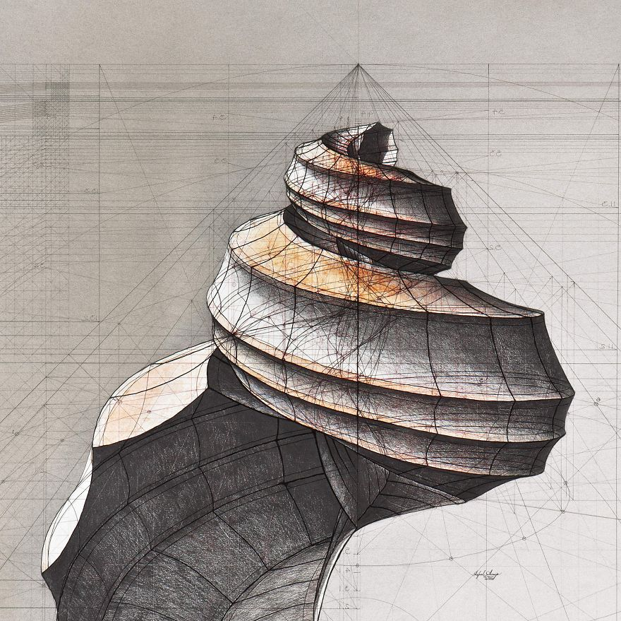 Brilliant Golden Ratio Hand Drawn Coloring Book Cognition Brands