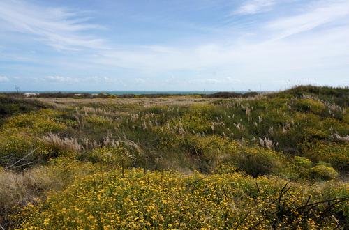 lot-dune.jpg
