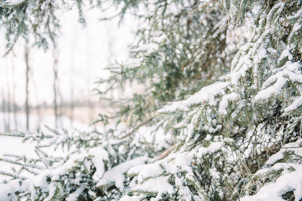 Christmas Blog-8.jpg