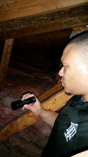 home+inspection+attic.jpg