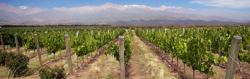 "Photo Credit: ""Vignoble Mendoza Argentine"" by European citizen - Own work. Licensed under CC BY-SA 3.0 via Wikimedia Commons"