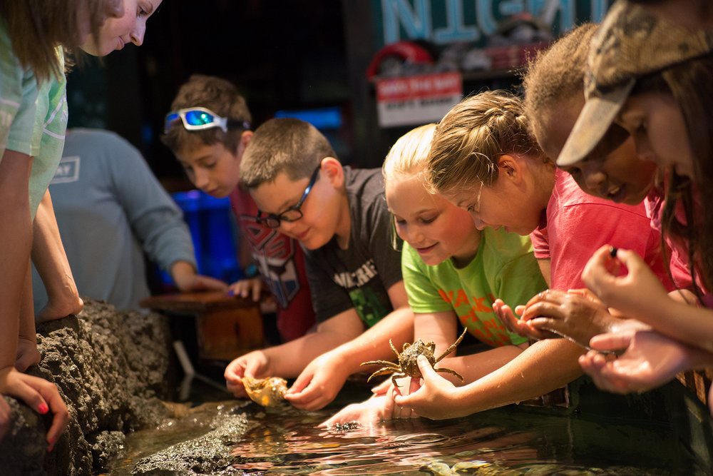 Save The Bay's Exploration Center and Aquarium on Easton's Beach is a great way to get hands-on with marine life from Narragansett Bay.
