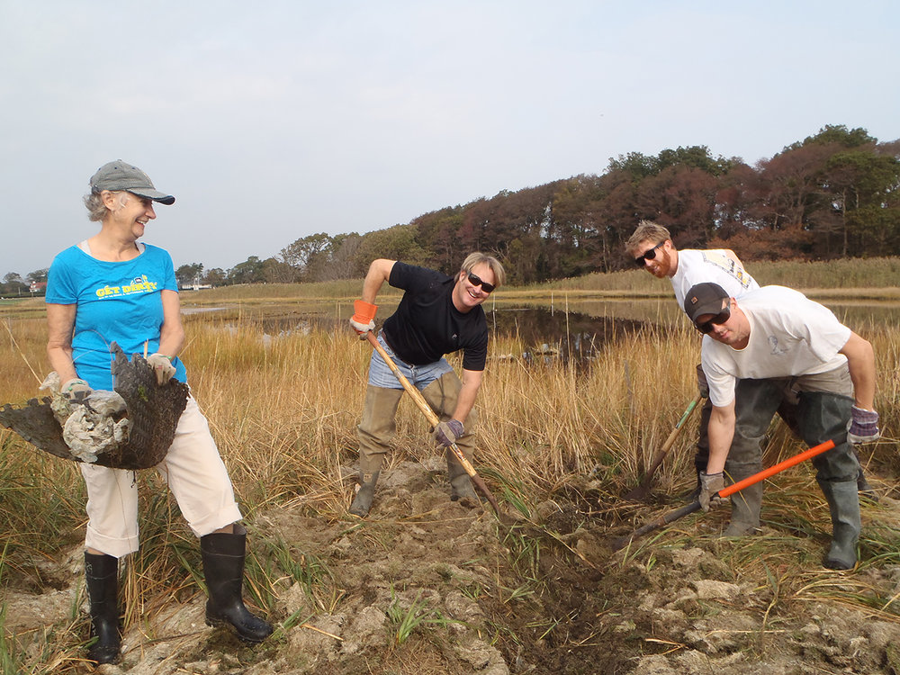 Local volunteers help Save The Bay dig shallow creeks to help restore RISD salt marsh in Barrington.