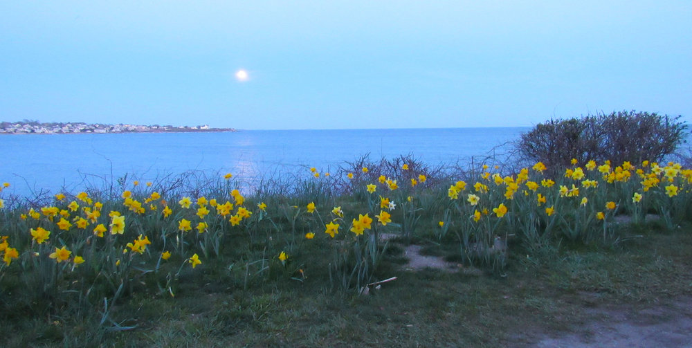 Daffodils at Dusk-Chanler Blog.jpg