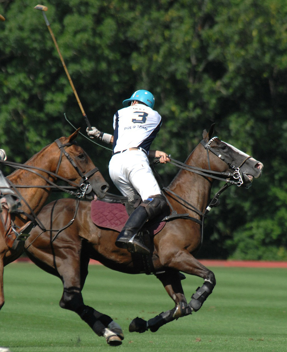 Polo in Action-Cliff Notes.jpg