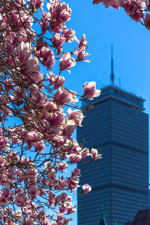 Boston-9820.jpg