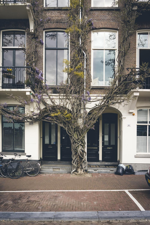 AmsterdamDay3-2.jpg