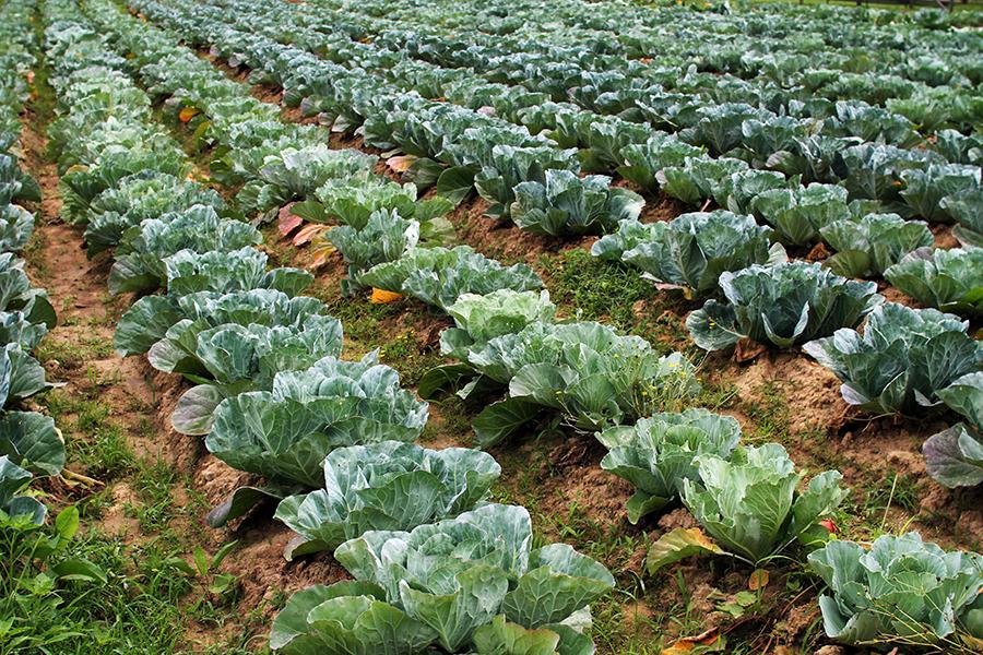 Farm4.png