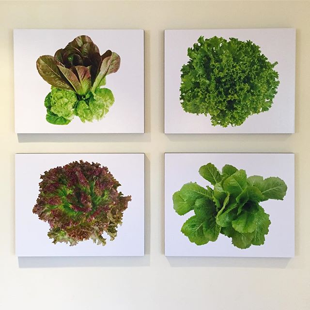 The lettuce portraits are finally here and adorning the kitchen wall. Nancy grows fine vegetables and Nations Photo Lab makes great print. It's fun to see my photos printed on a larger scale.