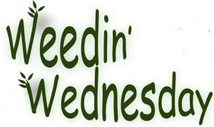weedinweds_edited-1