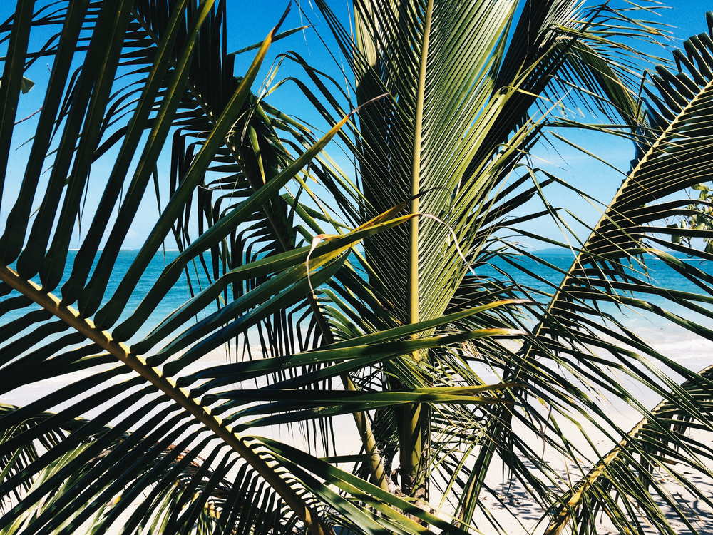 palmtree01