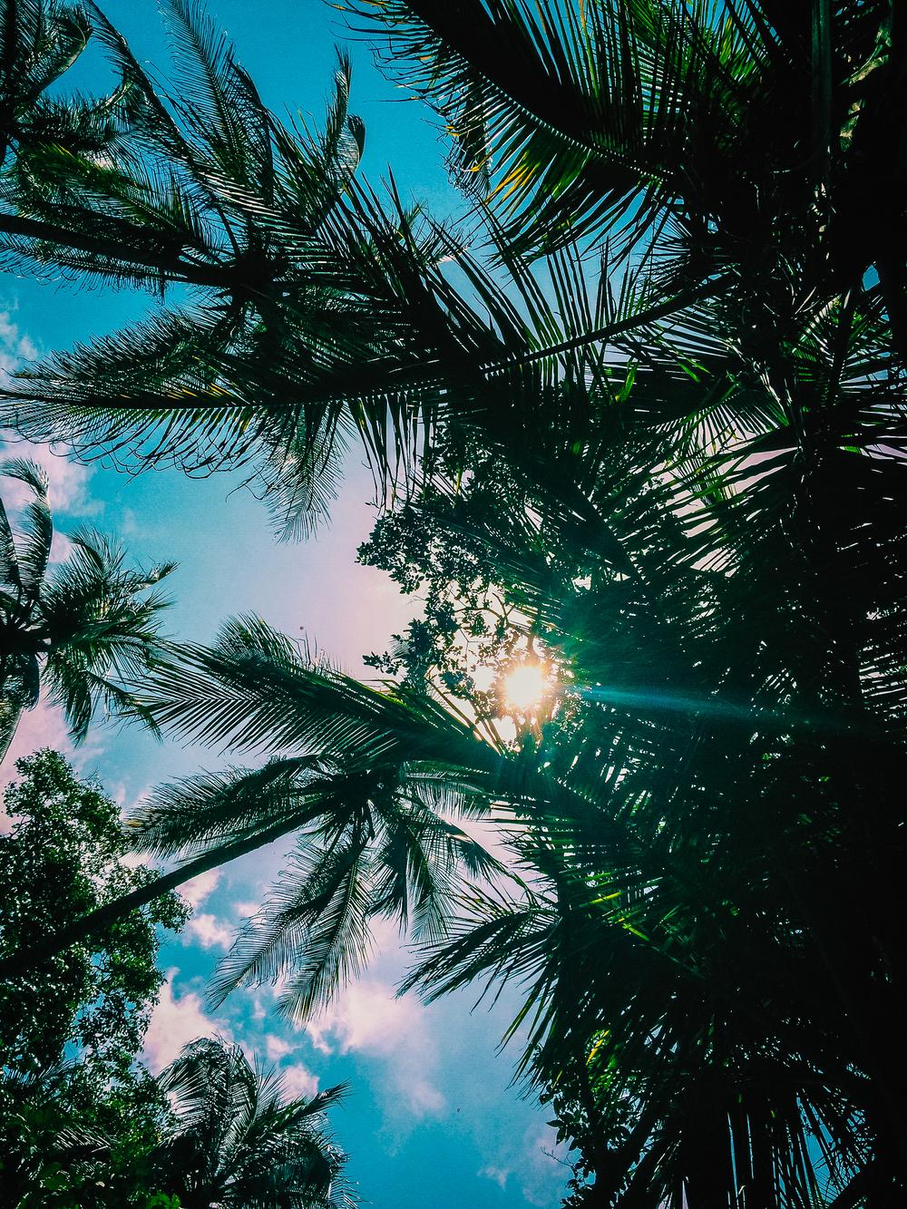 Palmtree-5.jpg
