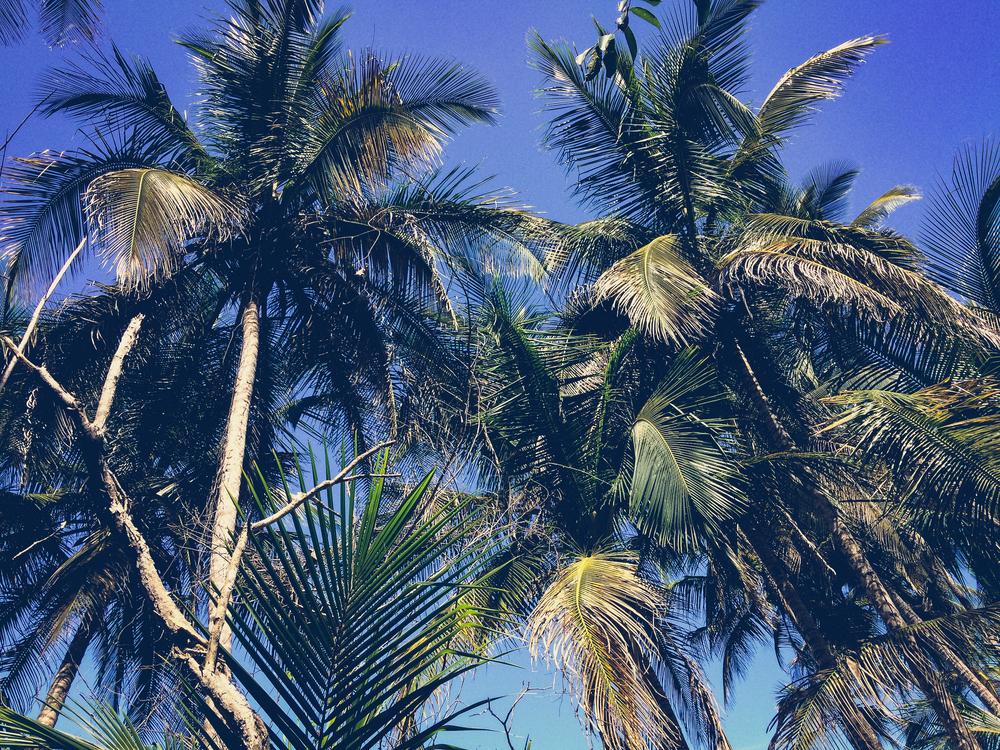 palmtree04