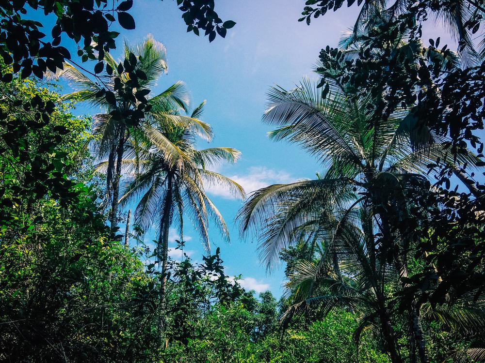 palmtree05