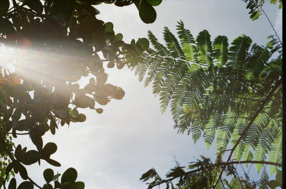 The Caribbean 2017 | Praktica MTL 5B | Kodak Gold Film