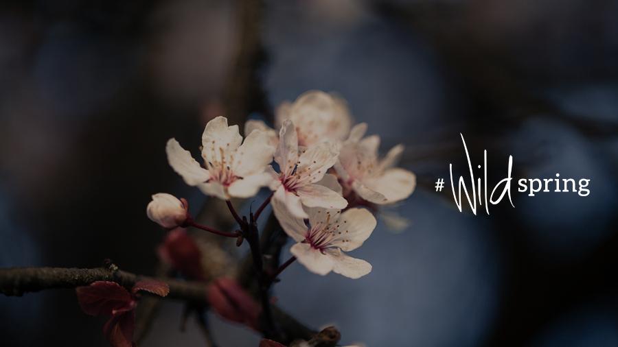 wild spring wildling magazine
