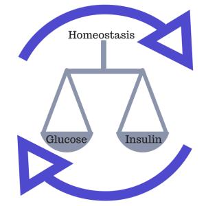 Balanced Blood Sugar Paleo Insulin Resistance