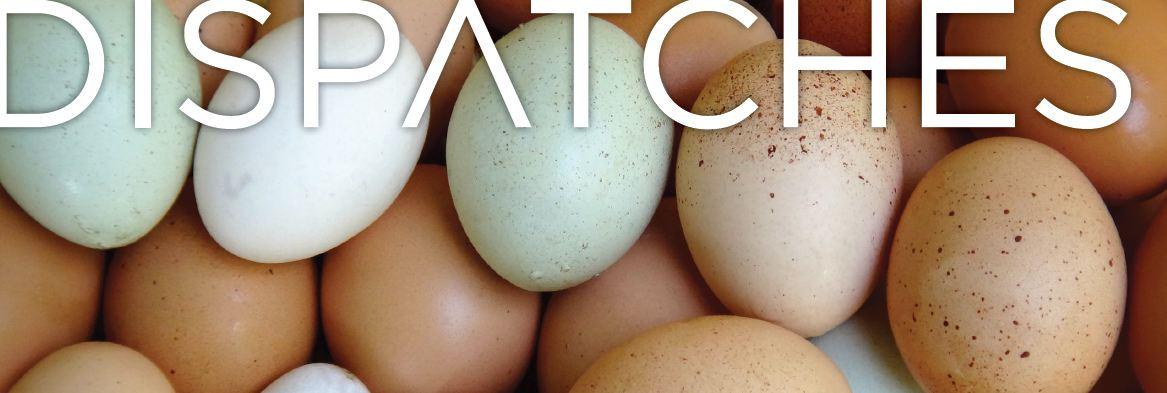 Egg Masthead