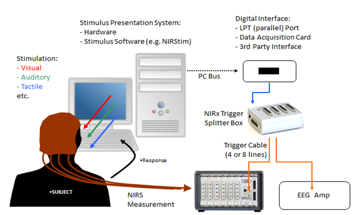 EEG 6.PNG