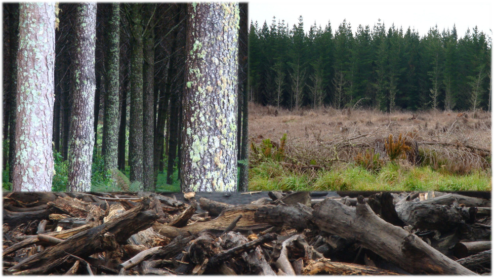Forestry final image.png