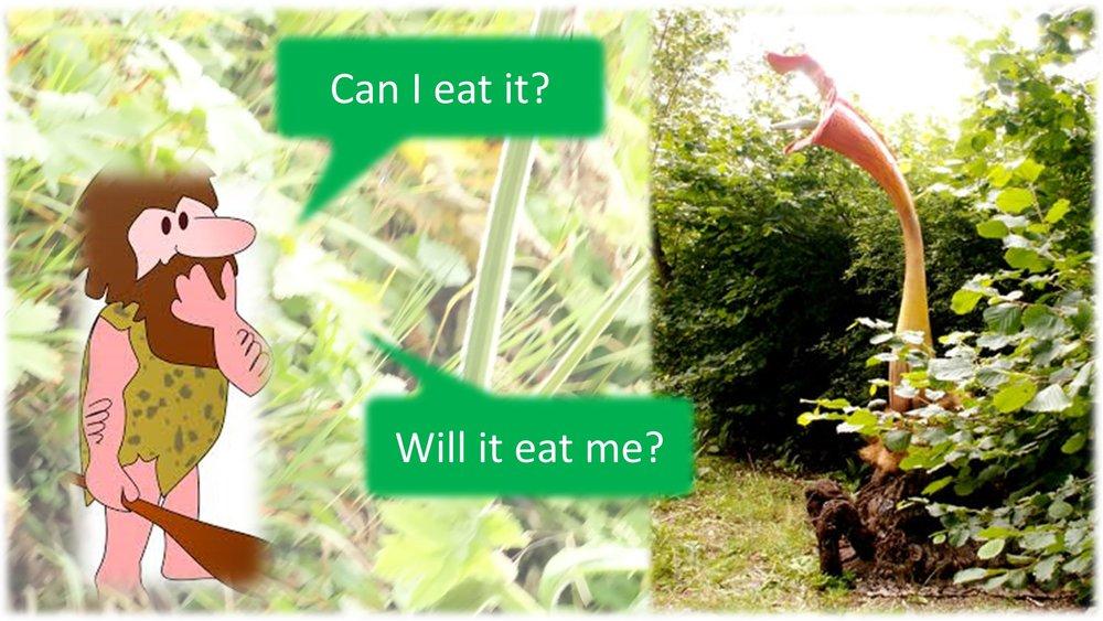 Plant based meat final.jpg